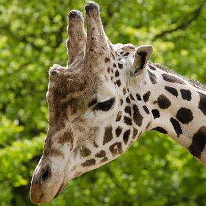 Тест по биологии 7 класс млекопитающие ответы