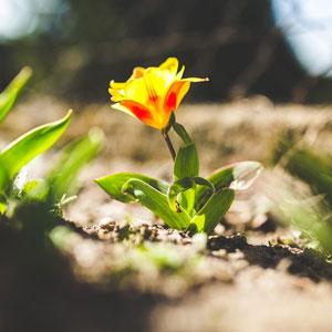 Платонов неизвестный цветок скачать